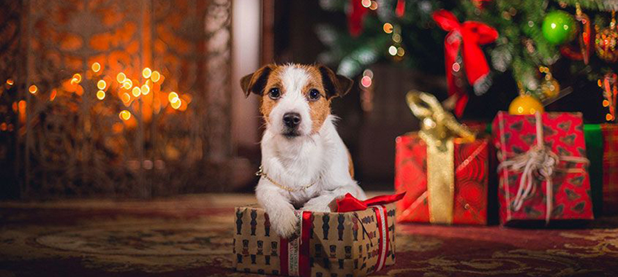 How to protect your Christmas tree from the destruction of pets? | Christmas Decoration Guide